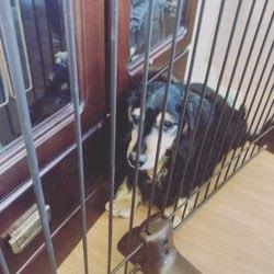 看板犬の小太郎の日常